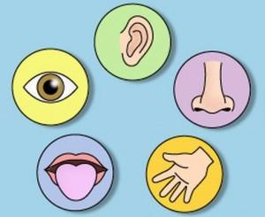 curiosidades 5 sentidos